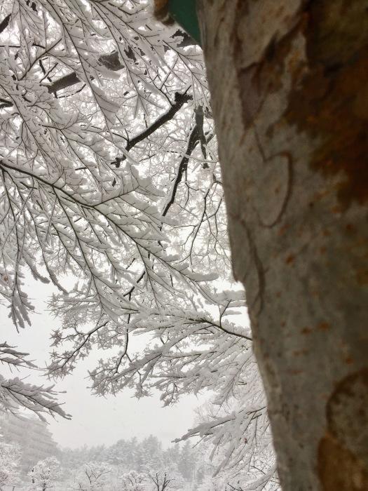 雪  (再会は天からのBIG サプライズ 大雪)の巻_d0105967_16593878.jpg