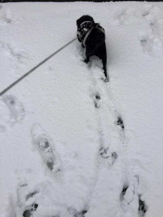 雪  (再会は天からのBIG サプライズ 大雪)の巻_d0105967_17004126.jpg