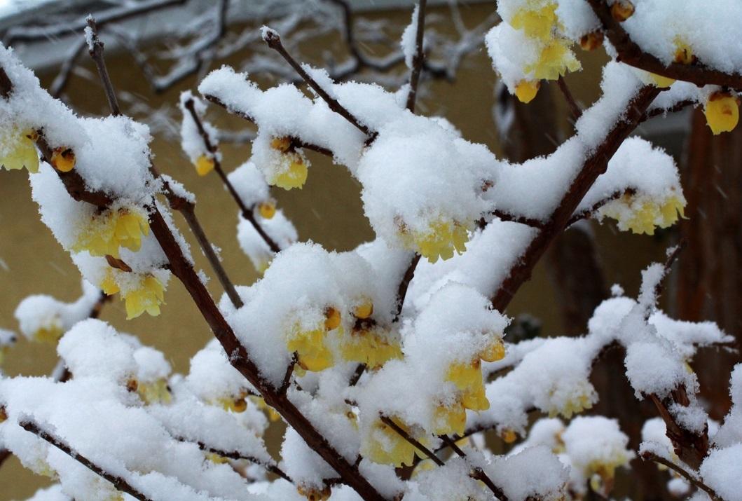 雪見酒の後の雪かき_a0107574_19351815.jpg
