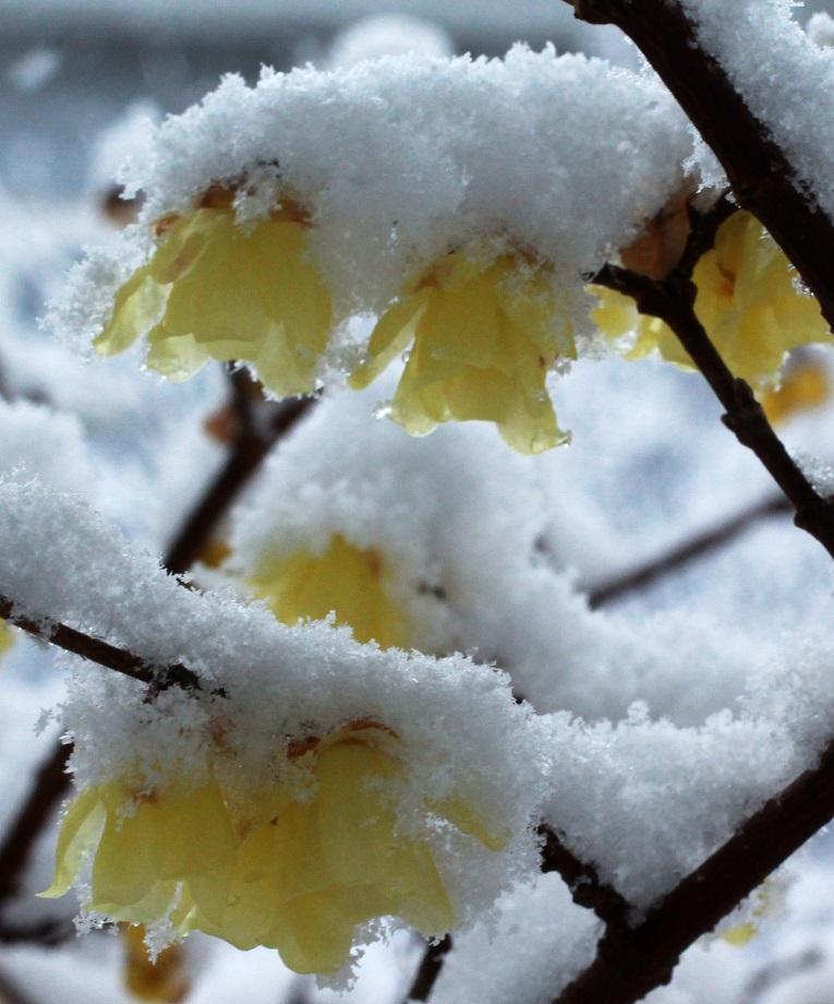 雪見酒の後の雪かき_a0107574_19352549.jpg