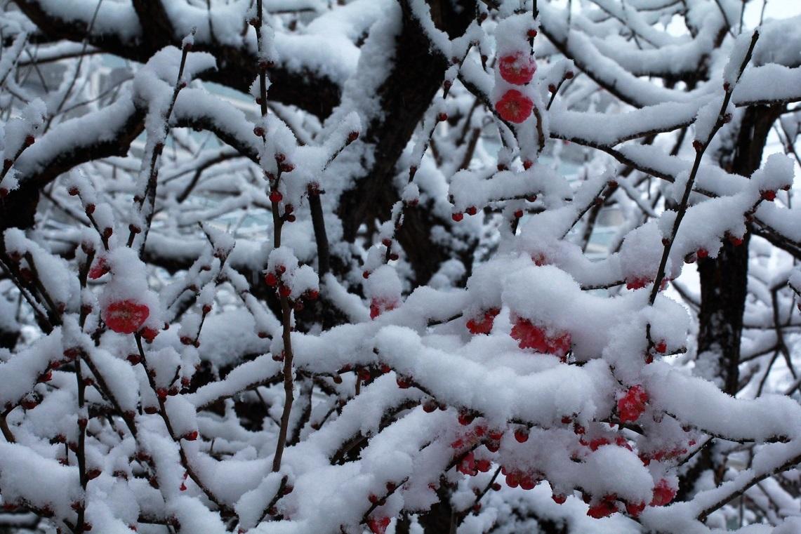 雪見酒の後の雪かき_a0107574_19353402.jpg