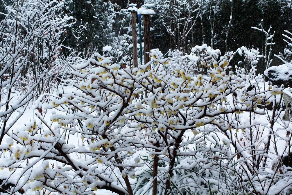 雪見酒の後の雪かき_a0107574_19354117.jpg