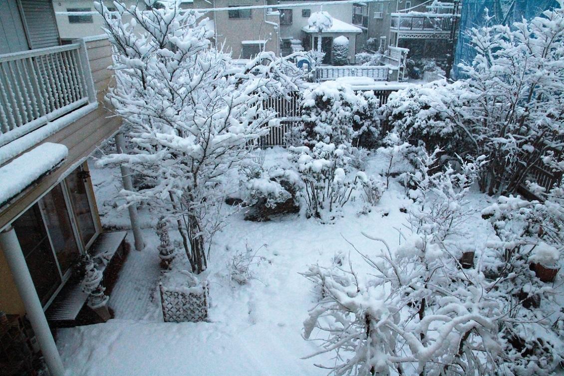 雪見酒の後の雪かき_a0107574_19355932.jpg