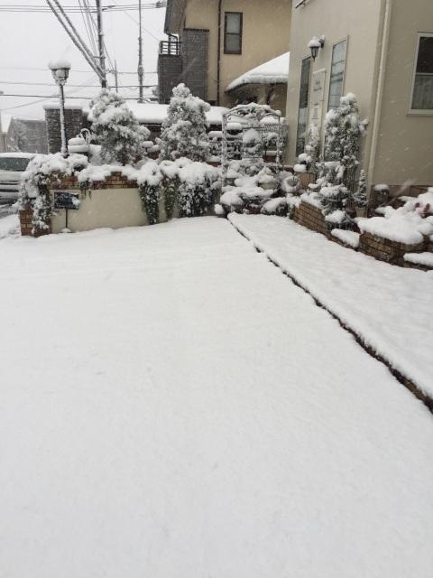 雪です~模様替えしました_a0221484_20033320.jpg