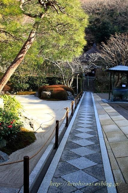 北鎌倉 冬の明月院 ②_f0374092_15412144.jpg