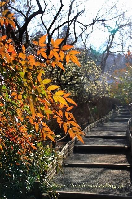 北鎌倉 冬の明月院 ②_f0374092_15491323.jpg