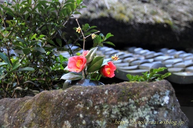 北鎌倉 冬の明月院 ②_f0374092_15534185.jpg