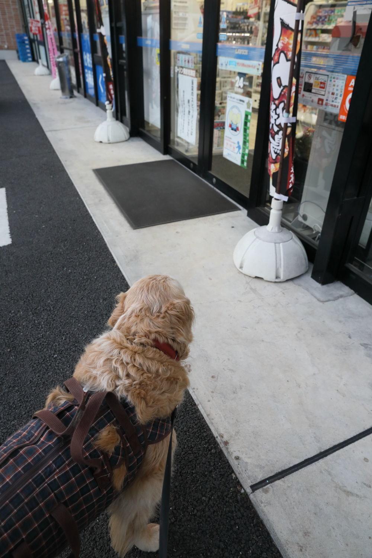 コンビニまで遠足!_b0275998_11381721.jpg