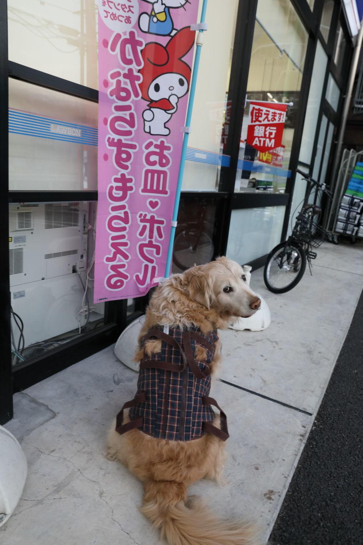 コンビニまで遠足!_b0275998_11382366.jpg
