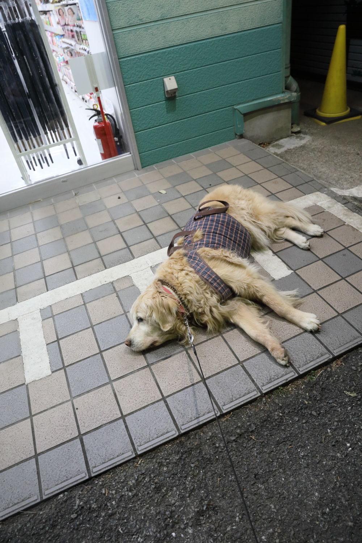 コンビニまで遠足!_b0275998_11393699.jpg