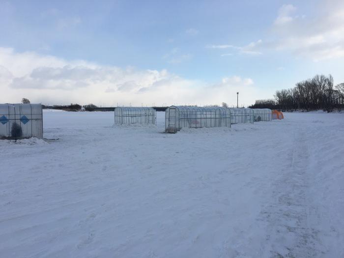 北海道の 氷上ワカサギ釣り !_c0226202_05591965.jpg