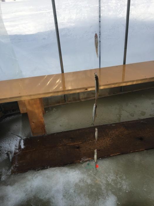 北海道の 氷上ワカサギ釣り !_c0226202_06080858.jpg