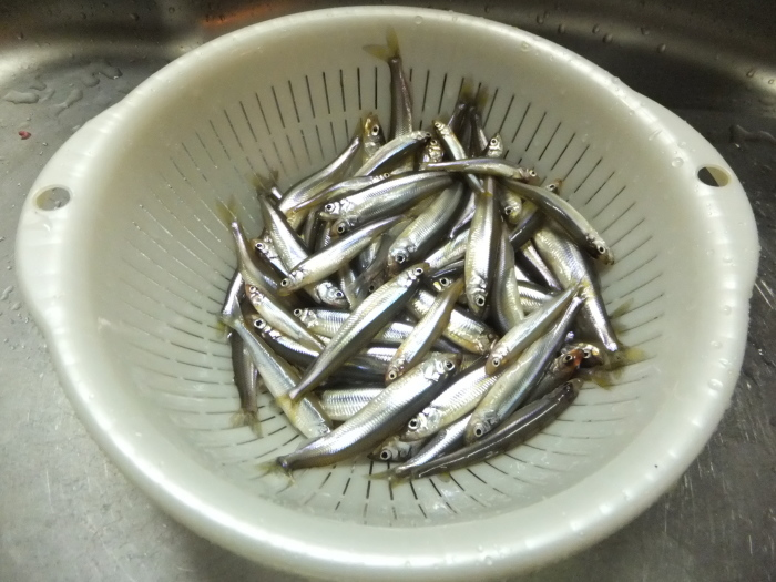 北海道の 氷上ワカサギ釣り !_c0226202_06082829.jpg