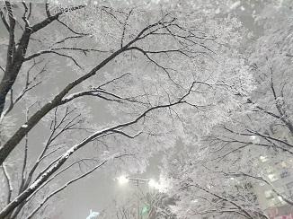 本日の東京のお天気→雪景色へ!_d0091909_09111346.jpg
