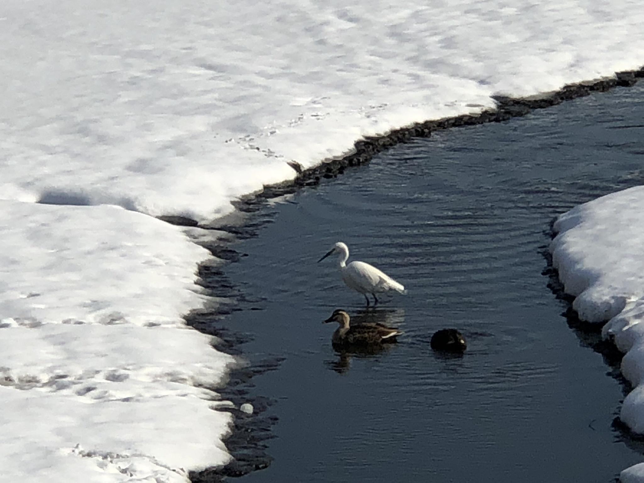 雪の井の頭公園_d0286718_17430163.jpeg