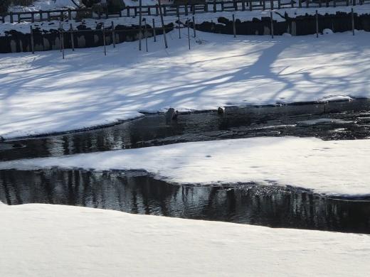 雪の井の頭公園_d0286718_17432881.jpeg