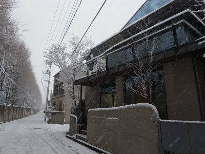 """時には厳しい""""自然との共生""""、東京に大雪警報_e0010418_09425526.jpg"""