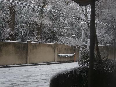 """時には厳しい""""自然との共生""""、東京に大雪警報_e0010418_09434402.jpg"""