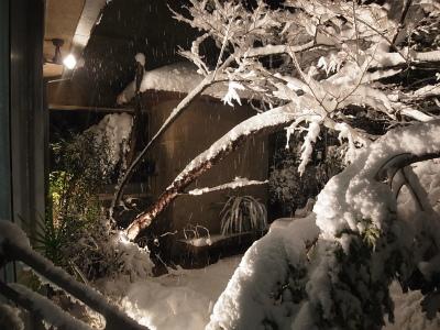 """時には厳しい""""自然との共生""""、東京に大雪警報_e0010418_09443780.jpg"""