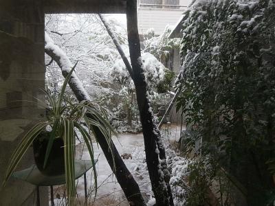 """時には厳しい""""自然との共生""""、東京に大雪警報_e0010418_09450600.jpg"""