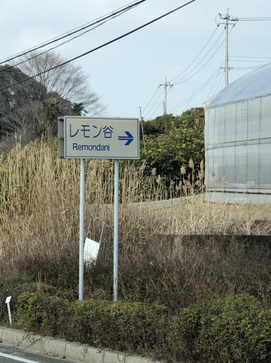 日本の有名バーテンダーが惚れ抜いたレモン!_f0215324_13314641.jpg