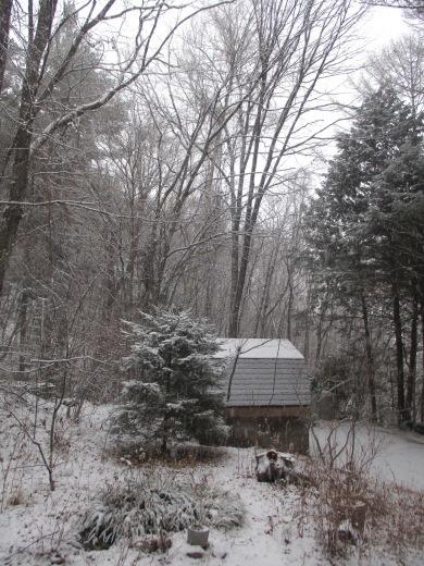 雪       1月23日_d0127634_08551593.jpg