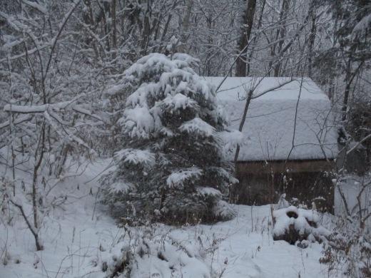 雪       1月23日_d0127634_08572890.jpg