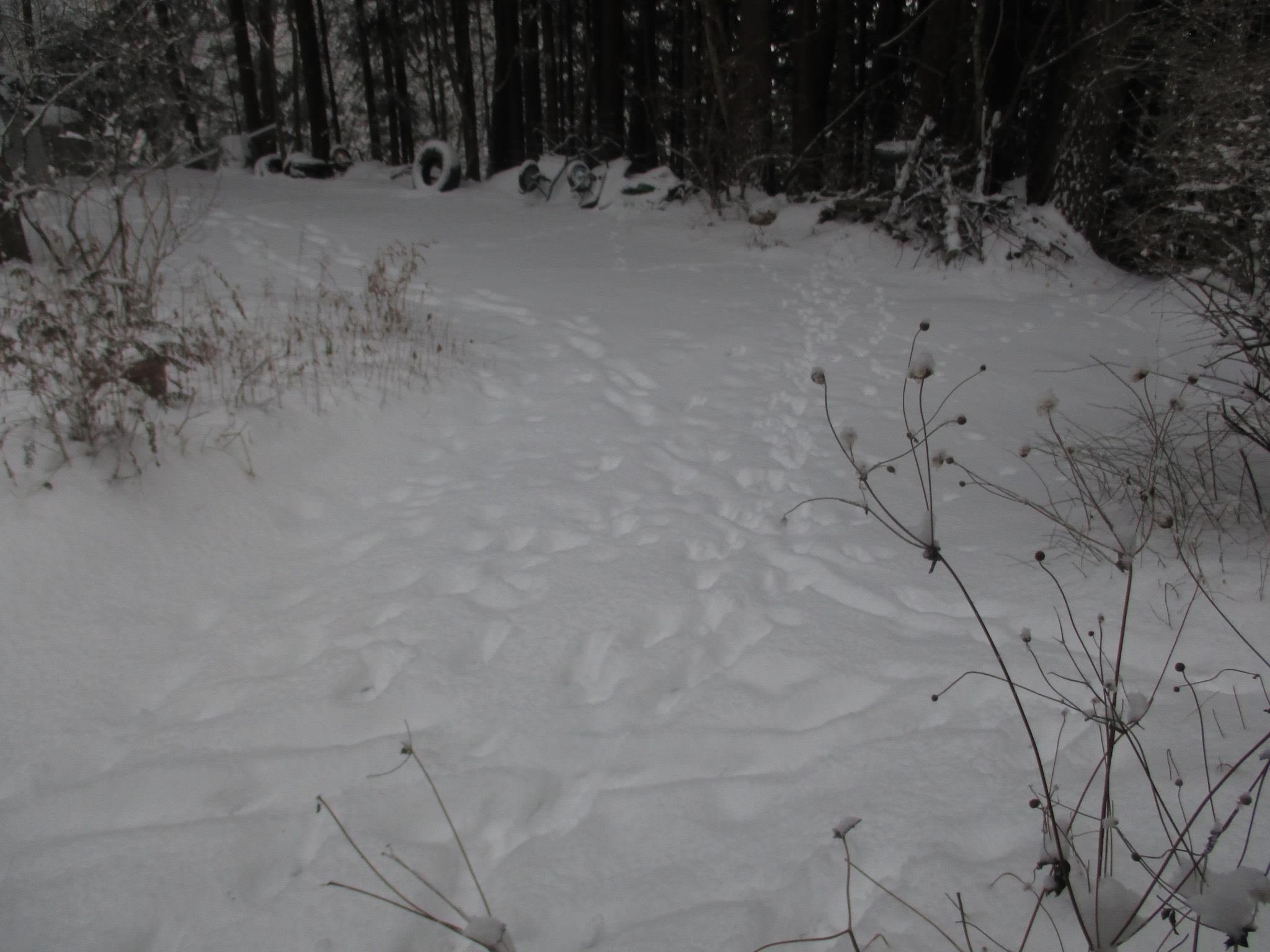 雪       1月23日_d0127634_09070578.jpg