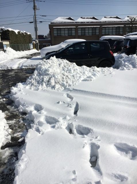 朝から雪掻き_c0206645_17011359.jpeg