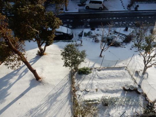 '18,1,23(火)関東地方は大雪でマヒしてたよ!_f0060461_08554227.jpg