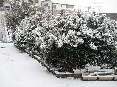 雪に負けるな!_a0368673_19330533.jpg