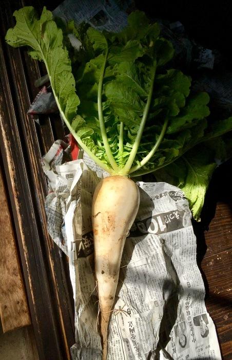 在来種の野菜_b0057979_15352522.jpg
