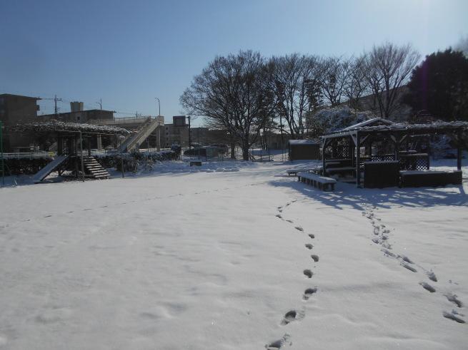 雪が積もったぞ〜 \\( ˆoˆ )/_f0334882_15091710.jpg