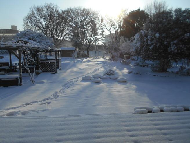 雪が積もったぞ〜 \\( ˆoˆ )/_f0334882_15093687.jpg