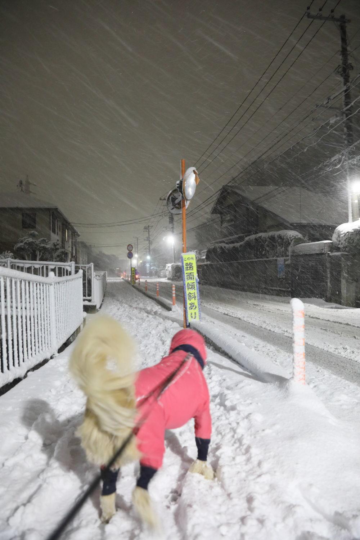 雪のくノ一さん_b0275998_12283228.jpg