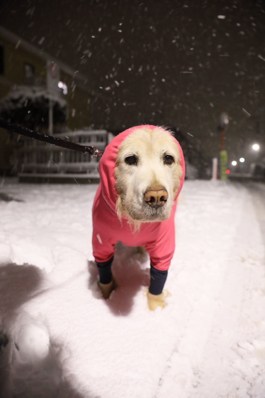 雪のくノ一さん_b0275998_12303202.jpg