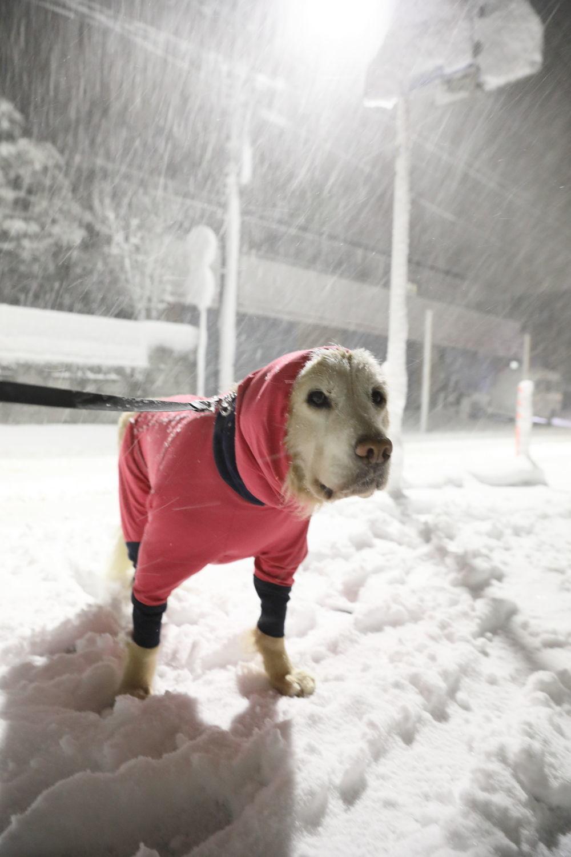 雪のくノ一さん_b0275998_12303516.jpg