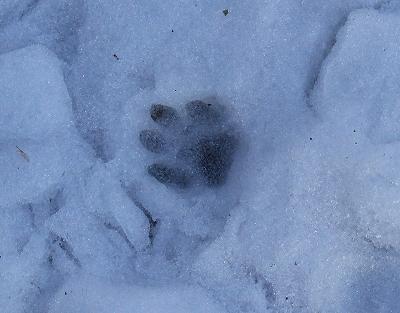 雪のあと_b0049307_11511015.jpg