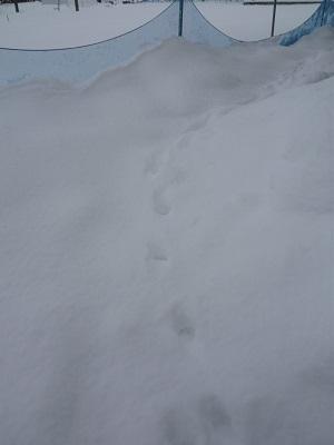 雪!!!でも ほっこり♪_c0369433_15474546.jpg