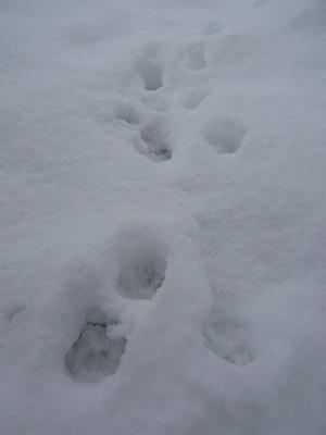 雪!!!でも ほっこり♪_c0369433_15475896.jpg