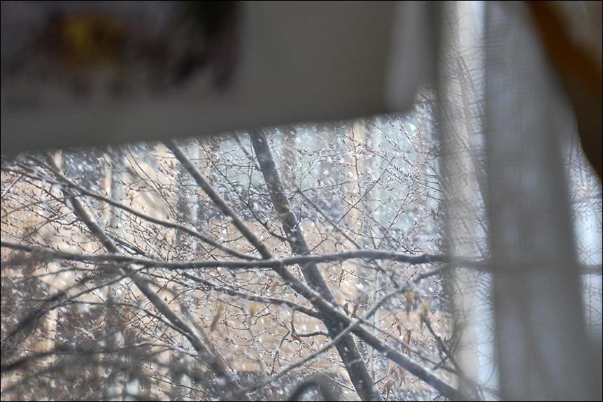 東京は二十数センチの雪となりました_a0031363_19162963.jpg