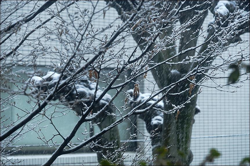 東京は二十数センチの雪となりました_a0031363_19165843.jpg