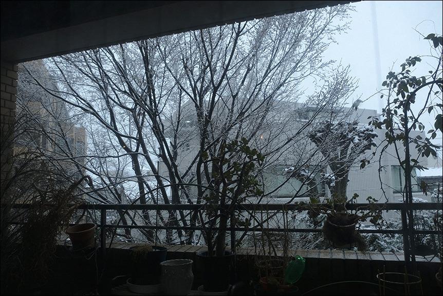 東京は二十数センチの雪となりました_a0031363_19170739.jpg