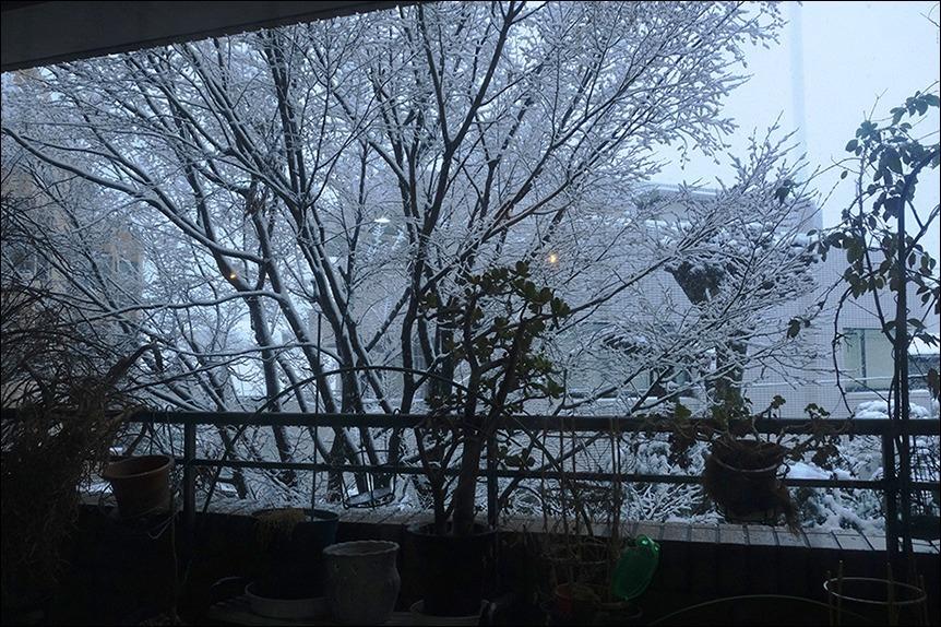 東京は二十数センチの雪となりました_a0031363_19172271.jpg