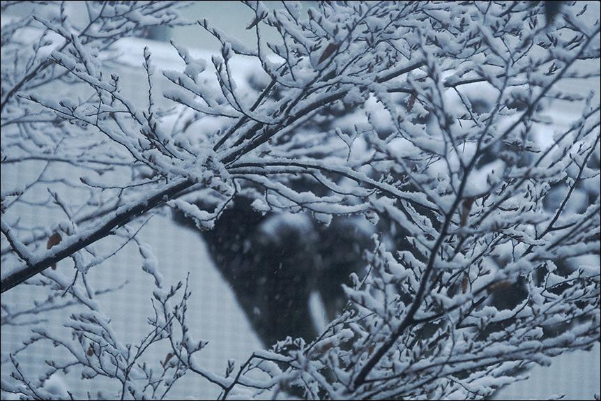 東京は二十数センチの雪となりました_a0031363_19190765.jpg