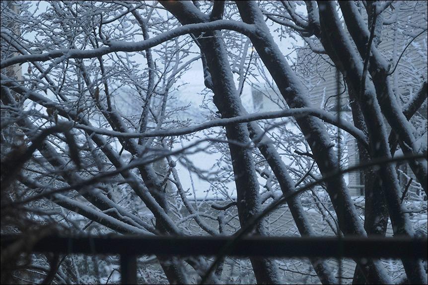 東京は二十数センチの雪となりました_a0031363_19194714.jpg