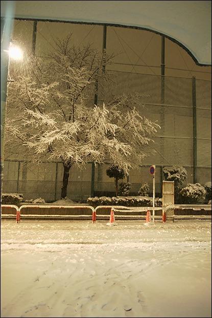 東京は二十数センチの雪となりました_a0031363_19200350.jpg