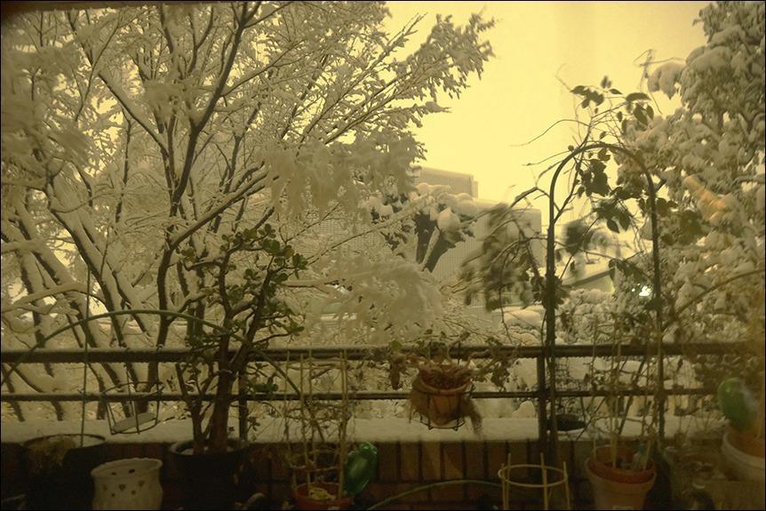 大雪の後の東京はなんとも寒い、寒い!_a0031363_19202477.jpg