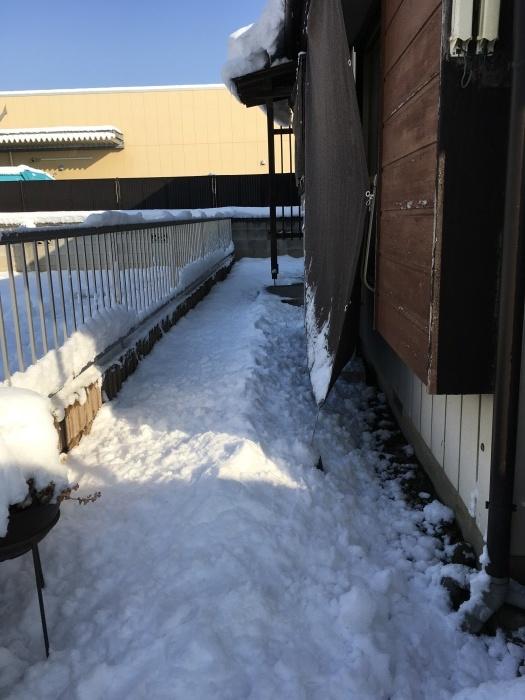 大雪予報でしたが・・・_a0123191_09092723.jpeg