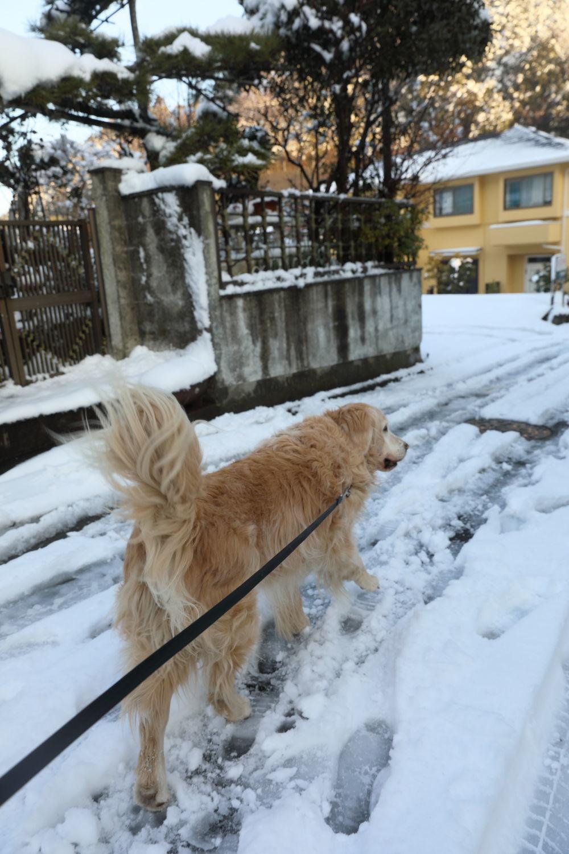雪の後♪_b0275998_18452009.jpg